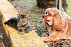 Cat and dog relaxing Stock Images