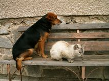 Cat and dog resting royalty free stock photography