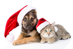 Cat and Dog with Santa Claus hat. isolated on white background Stock Photos