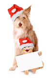 Cat and dog with Santa hat and banner. On a white background Royalty Free Stock Images