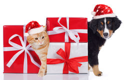 Cat and dog with santa hat and gifts Stock Photography