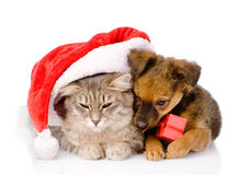 Cat and dog with santa hat and red box. isolated on white backgr Stock Photo