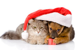 Cat and dog with santa hat and red box. isolated on white backgr Stock Images