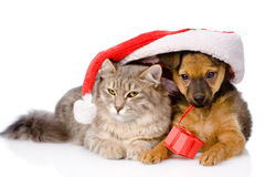Cat and dog with santa hat and red box.  on white Stock Photo