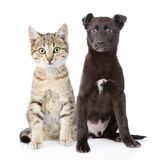 Cat and dog sitting in front. isolated on white background Stock Images