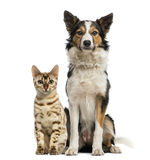 Cat and dog sitting together Royalty Free Stock Photos