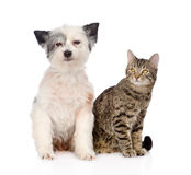 Cat and dog sitting together. isolated on white background Royalty Free Stock Photo