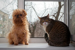 Cat and dog  sitting on the window Royalty Free Stock Photography