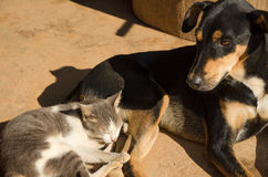 Cat and dog sleeping on floor Stock Image