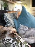 Cat and dog sleeping next to eacho ther stock photos