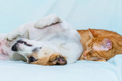 Cat and dog sleeping on the sofa Stock Image