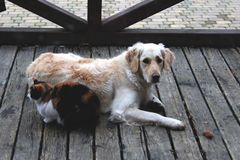 Dog and cat together. Cat and dog sleeping together Stock Photos