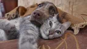 Cat and a dog are sleeping together funny video. cat and dog friendship indoors