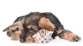 Cat and dog sleeping together. isolated on white background Stock Images