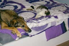 cat and dog sleeping in the bed stock photography