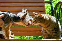 The cat and dog stare at each other. On a bench in the summer park Stock Photography
