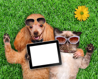 Cat and dog taking a selfie. Stock Photos