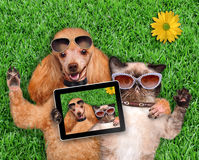 Cat and dog taking a selfie. Royalty Free Stock Photos