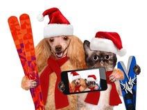 Cat and dog taking a selfie together with a smartphone Royalty Free Stock Photography