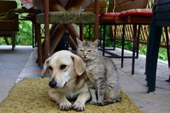 Cat and dog lounge together as a best friends. Cat and dog to lounge together as a best friends sadness in eyes Royalty Free Stock Image