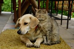 Cat and dog lounge together as a best friends. Cat and dog to lounge together as a best friends sadness in eyes Royalty Free Stock Photography