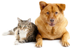 Cat and dog together Stock Images