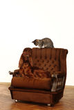 Cat and dog together Royalty Free Stock Images