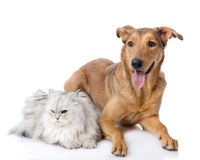 Cat and dog together. Stock Photos