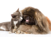 Cat and dog together. isolated on white background Stock Photo