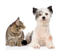 Cat with dog together. isolated on white background Stock Images