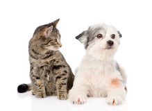 Cat with dog together. isolated on white background Stock Photo
