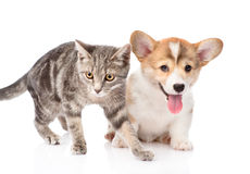 Cat and dog together. isolated on white background Royalty Free Stock Image
