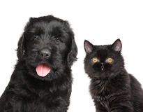Cat and dog. Together isolated on white background stock images