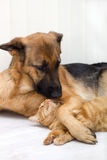Cat and dog together. Lying on the floor royalty free stock photos