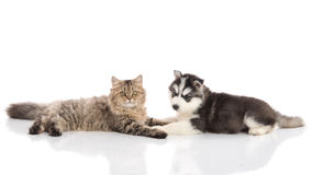 Cat and dog together lying on a white background Royalty Free Stock Photography
