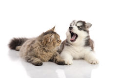 Cat and dog together lying on a white background Stock Photos