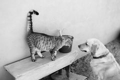 Cat and dog together Royalty Free Stock Photos