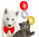Cat and dog together, Scottish kitten, Husky puppy. Party mood. Isolated on white Stock Photo