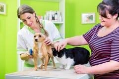 Cat and dog together at vet or pet hairdresser. Cat and dog together with their owner at vet or pet hairdresser Royalty Free Stock Image