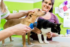 Cat and dog together at vet or pet hairdresser. Mom and the women taking care of them Stock Photos