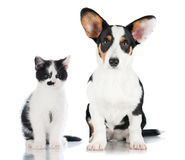 Cat and dog. Together on white stock photography