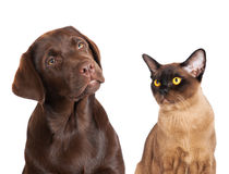 Cat and dog. Together on white royalty free stock photos