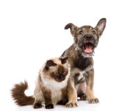 Cat and dog together.  on white Stock Images