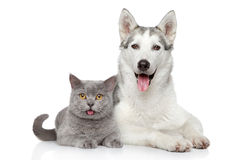 Happy cat and dog together on a white