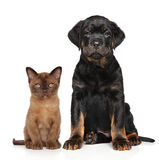 Cat and dog together Stock Image