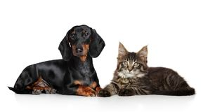 Cat and dog together on a white background. Cute cat and dog lying down on white floor. Studio shooting stock image