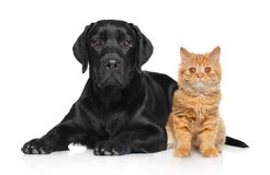 Cat and dog together on a white background Royalty Free Stock Photography