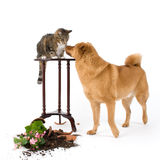 Cat and Dog troublemakers stock photography