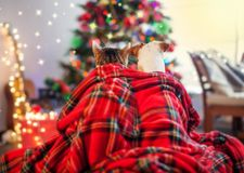 Cat and dog under a christmas tree. Pets sitting backs and looking at the Christmas tree stock images
