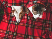 Cat and dog under plaid Stock Photo